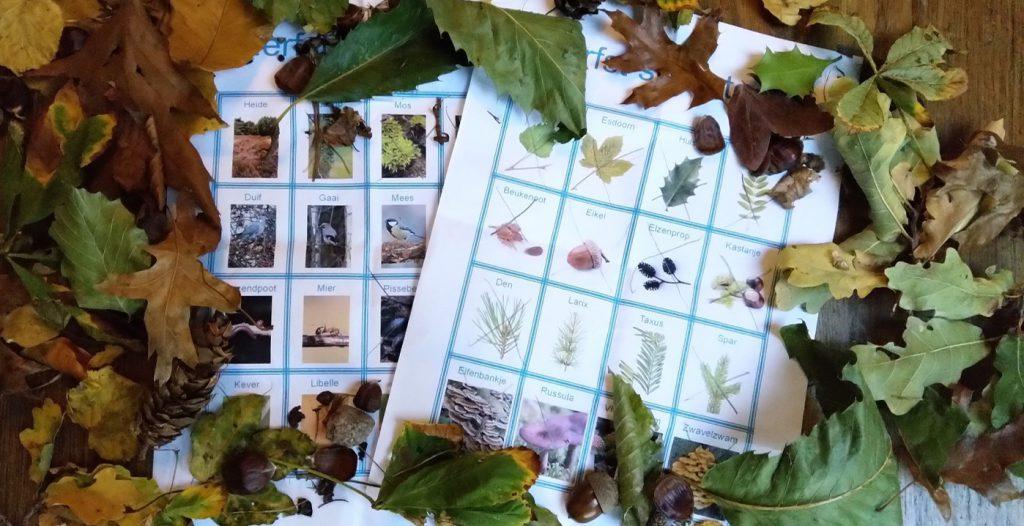 Een actieve en educatieve boswandeling